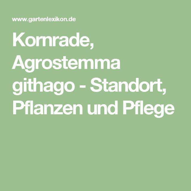 Kornrade, Agrostemma Githago   Standort, Pflanzen Und Pflege