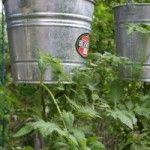 Five DIY upside down tomato planters