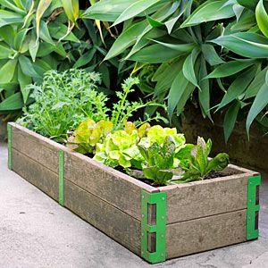 Scout Regalia's Patio Garden-you can garden even if you're in the city!