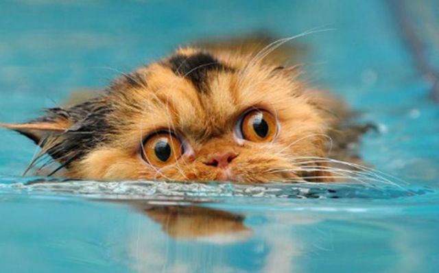 Funny Cats In Water - Animal Stories