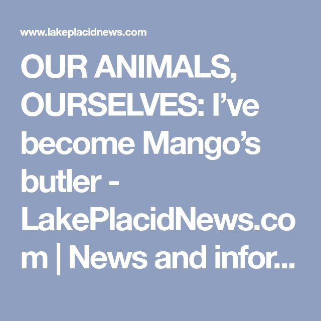 OUR ANIMALS, OURSELVES: I've become Mango's butler - LakePlacidNews.com | News and information on the Lake Placid and Essex County region of New York - Lake Placid News