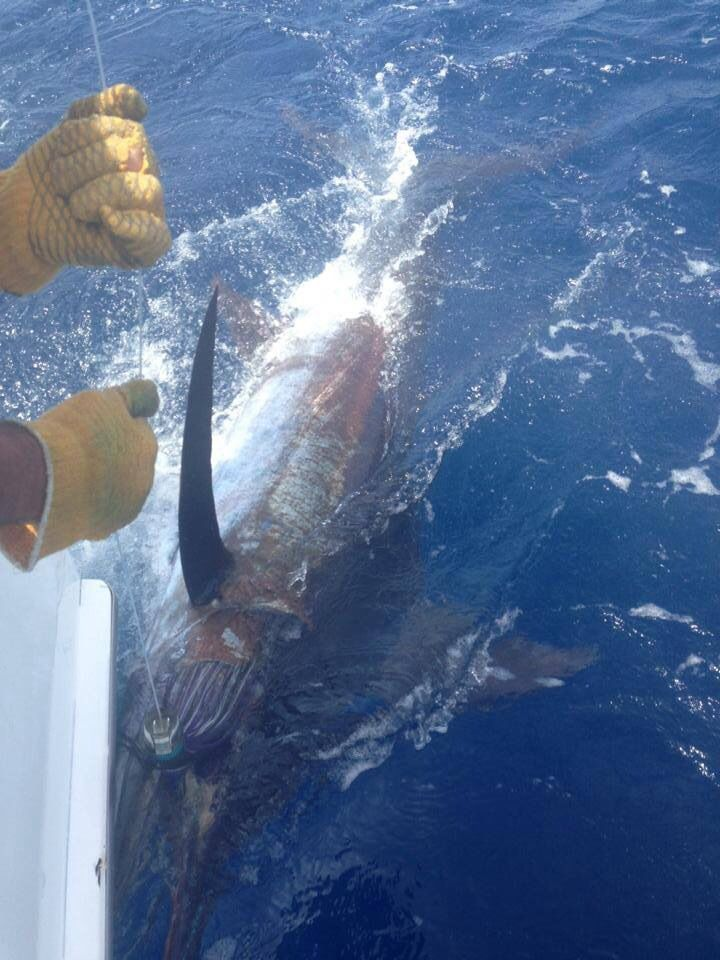 39 best images about fajardo pr on pinterest fishing for Fishing puerto rico