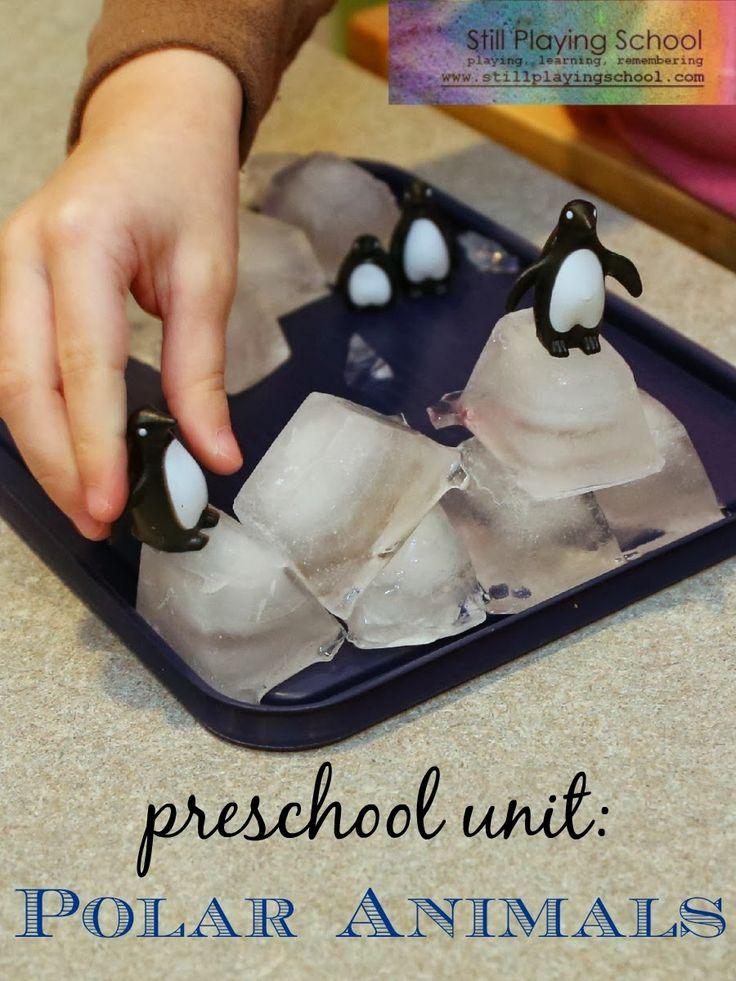 Super round up of Polar Animal activities. Still Playing School: Polar Animals: A Preschool Unit