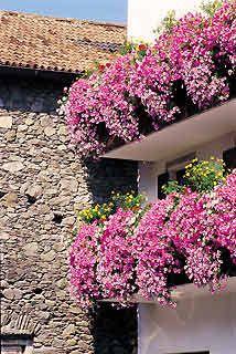 plantas colgantes para balcones - Buscar con Google