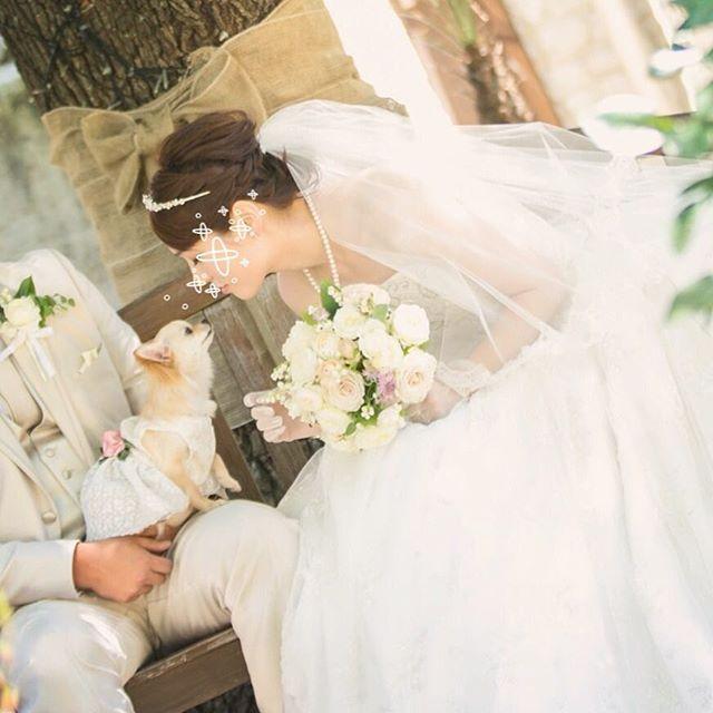 結婚式シリーズ最後! 結婚式をここまでちゃんとやろうとは思ってなかったけど、ほんとにやってよかったなって思う。 旦那さんに感謝∩^ω^∩ #結婚式  #wedding #ウェディング #ウェディングドレス #weddingdress  #愛犬 #チワワ #chihuahua #dogstagram#ロングコートチワワ