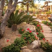 135 best Southwest GardeningLandscapePatios images on Pinterest