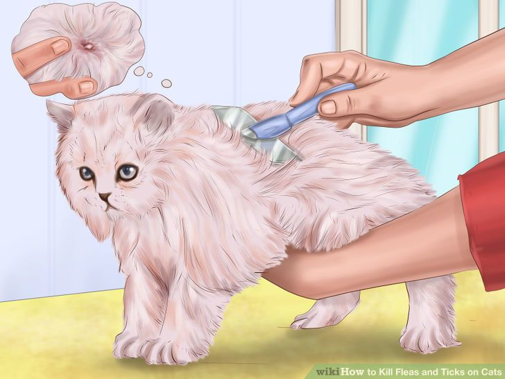 Image titled Kill Fleas and Ticks on Cats Step 2