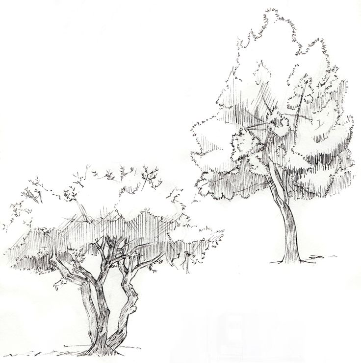 how to draw forest trees step by step