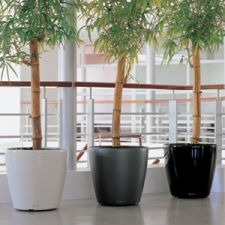 We believe in maintaining the good relation with our customer and thus the plants which we supply are of best quality. http://www.indoor-plants-melbourne.blogspot.com.au/2014/12/get-any-type-of-interior-design-of-plant.html