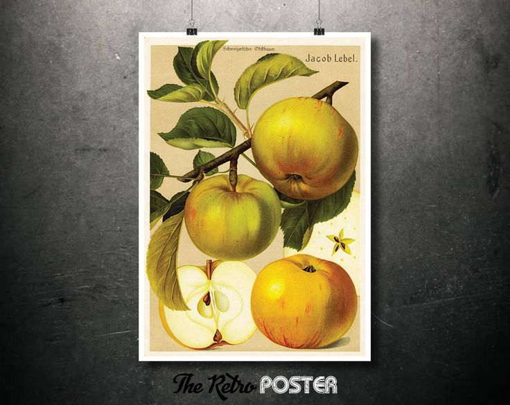 Apple - Jacob Lebel - Fruit Print, Plant, Plants, Nature Prints, Botanical Poster Vintage, Kitchen Gifts, Botanical Illustration by TheRetroPoster on Etsy