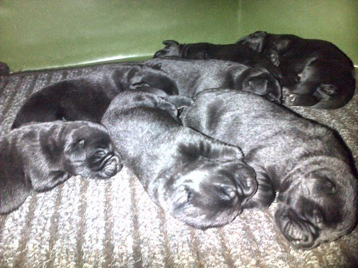 Cats of Claridge: Puppies Progress and Playfulness :)
