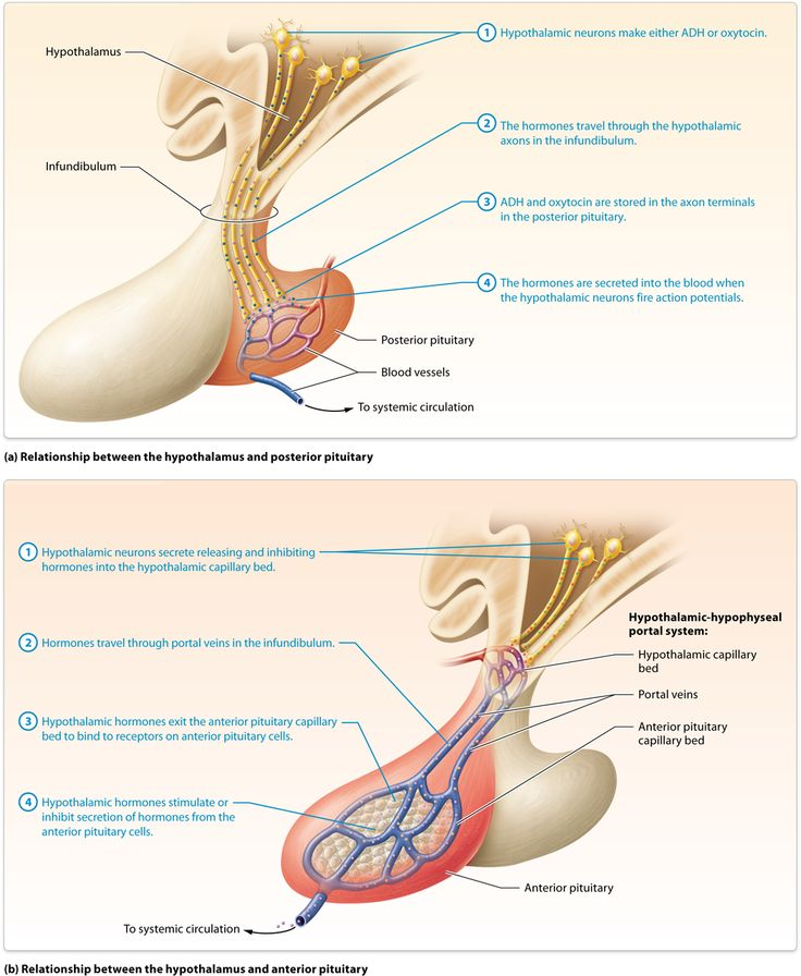 23 best A and P II images on Pinterest | Human anatomy and ...