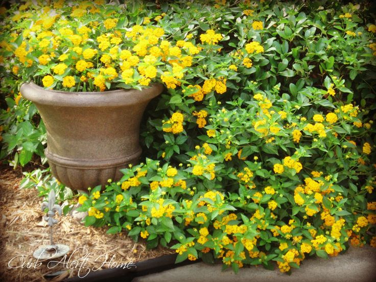 59 best plants that thrive in north Texas images on Pinterest ...
