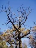 Empty tree