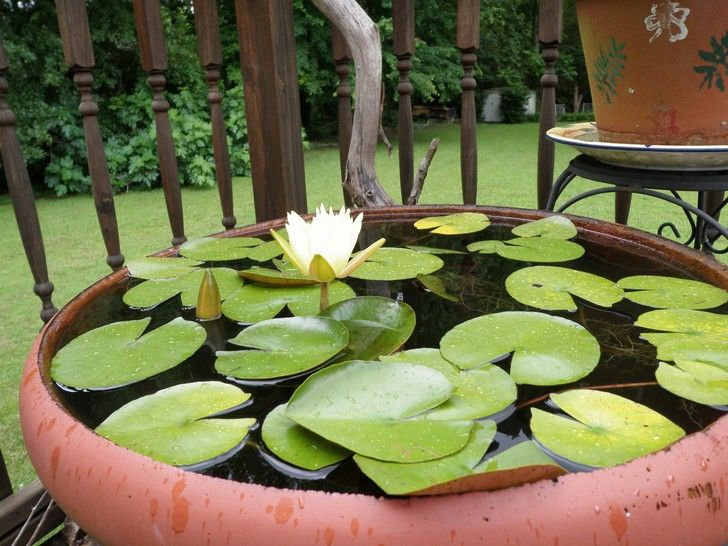 A DIY water garden on your balcony or in your garden? A mini pond