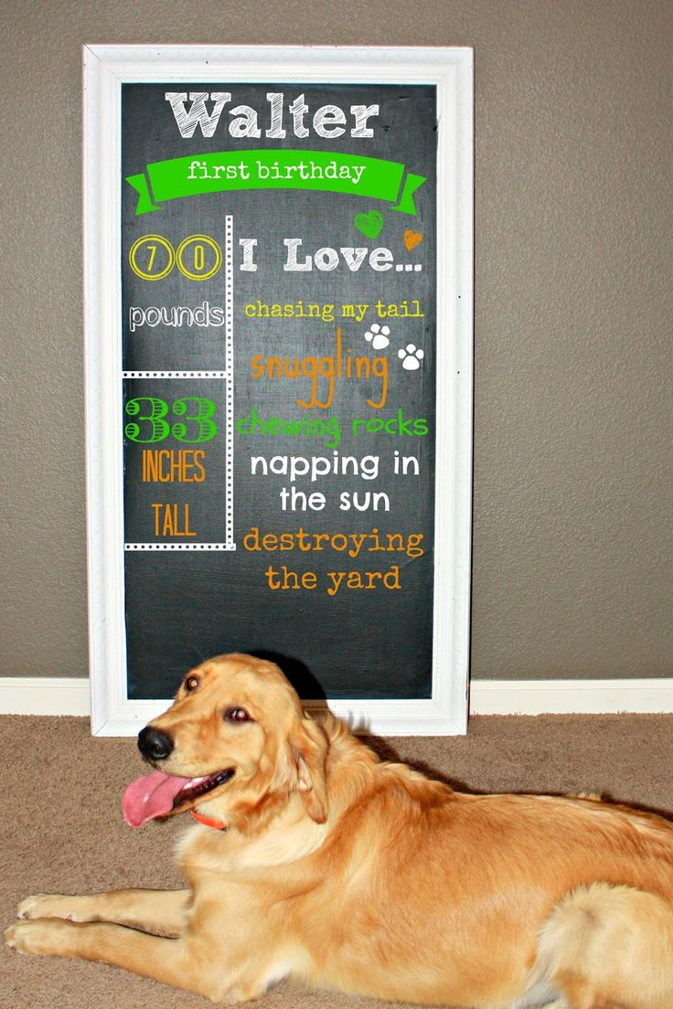 dog birthday chalkboard- Why did i not think of doing this. This is definitely happening for his second birthday!!1