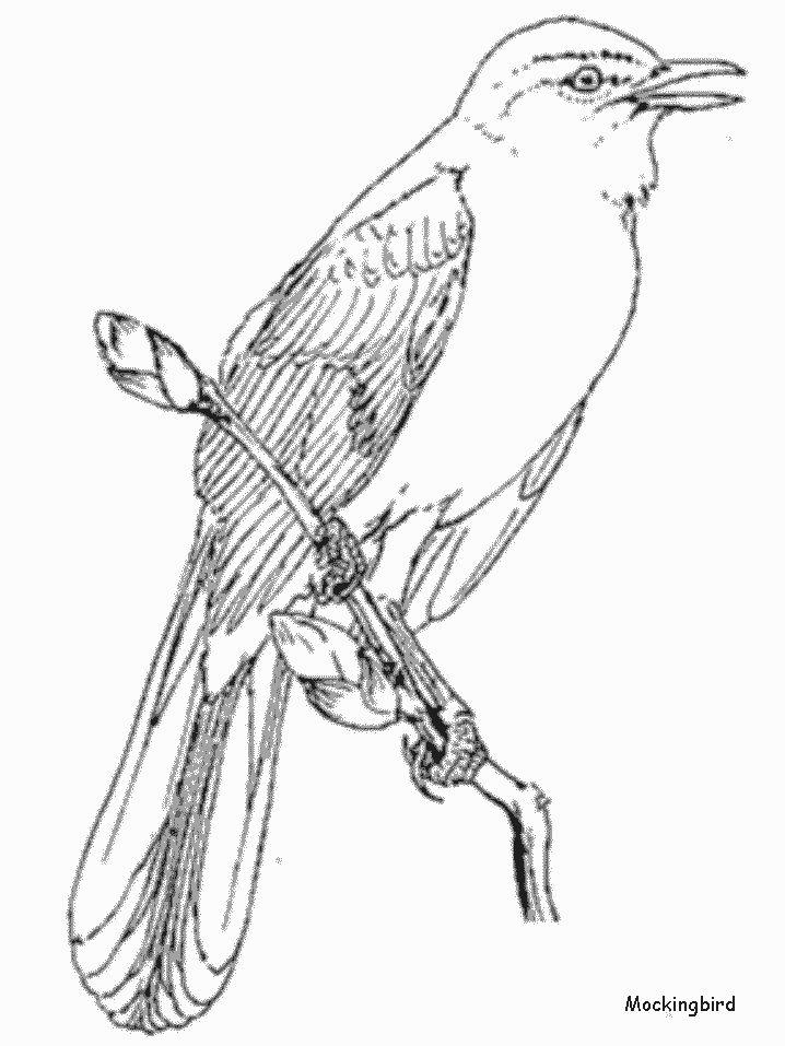Mocking Bird Coloring PagesSpaTemplateColouring
