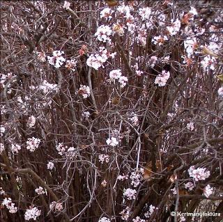 Kertmanufaktúra: Virágos kert télen is