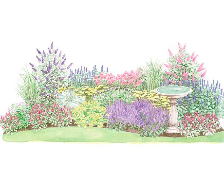 Deer resistant perennial garden