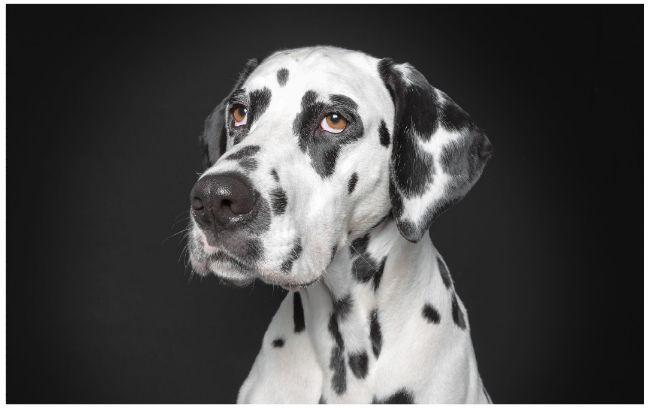 """Il fotografoRalph Hargartenè autore di un progetto fotografico che si intitola """"A Dog's Life"""", vita da cani. Ha cercato di trattare gli animali come se stesse realizzando dei ritrattiagli umani. Il risultato è veramente divertente e interessante. Questi cani hanno delle espressioni che sembrano umane! 1.Quando pensi di aver trovato un parcheggio libero ma in…"""