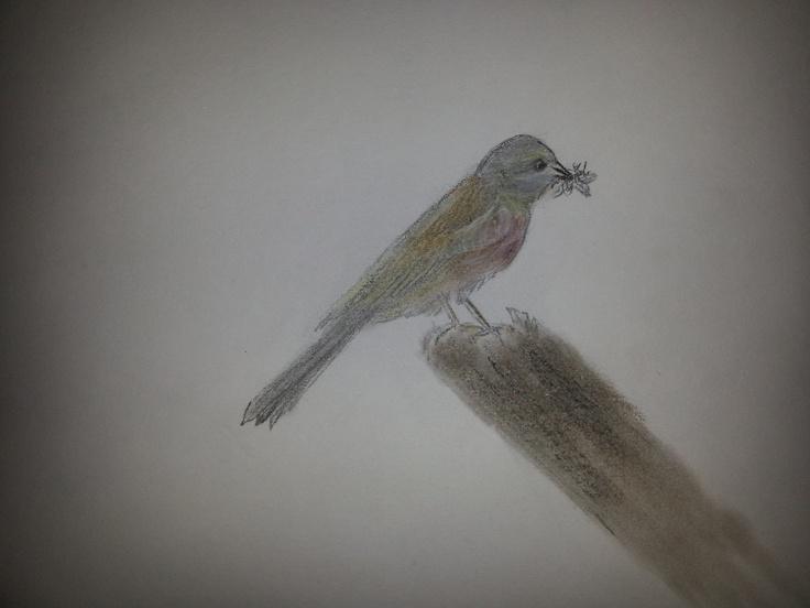 Sketch - bird & fly