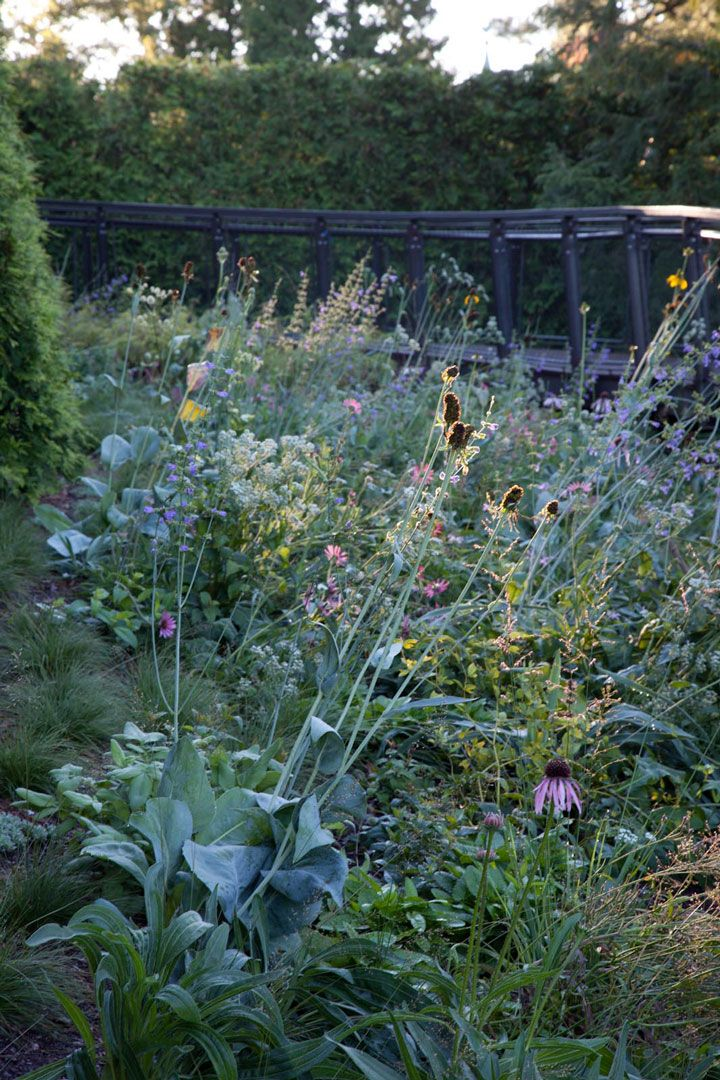 Seed heads of <em>Rudbeckia maxima</em>, or large coneflower, catch the light in the new planting surrounding the Elevated Path. <h6>Photo by Lisa Roper</h6>