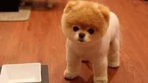 e-book adestramento de cachorro adulto filhote frete grátis
