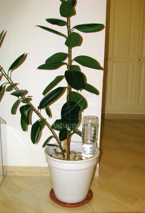 Les 25 meilleures id es de la cat gorie arrosage for Arrosage automatique plantes interieur