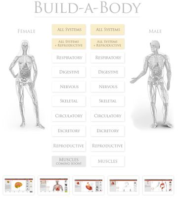 An Interactive Build a Body Lesson