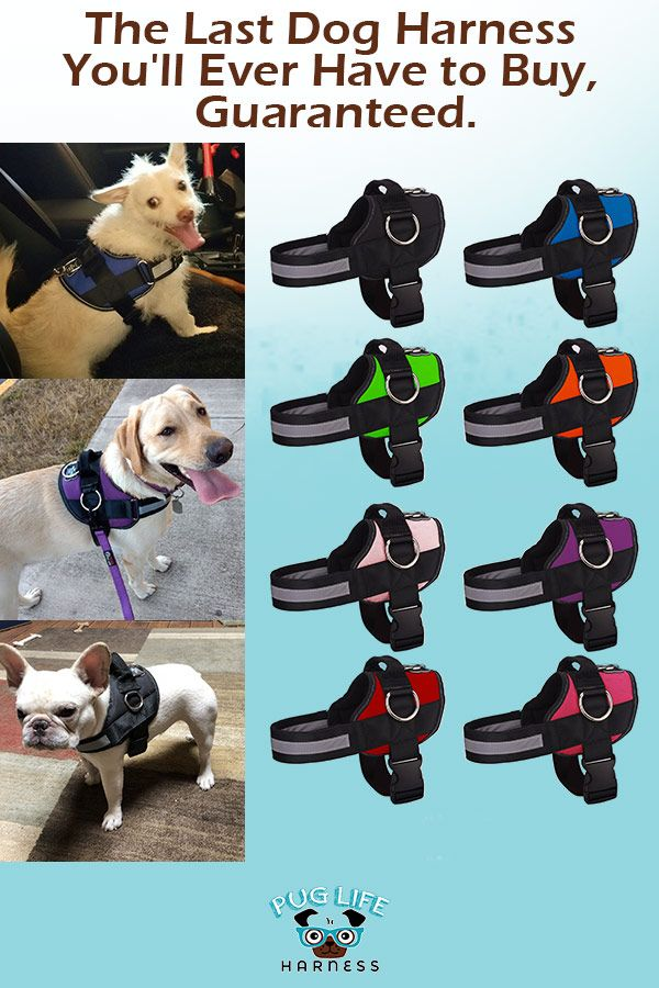 The Last Dog Harness You Ll Ever Have To Buy Guaranteed Dogs
