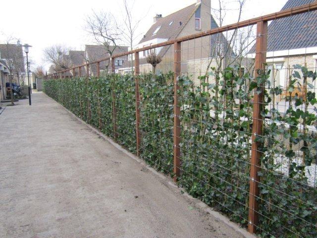 Low budget garden ideas - Garden Oasis Jaccuzi Fencing Garden Ideas Trellis Garden House Forward