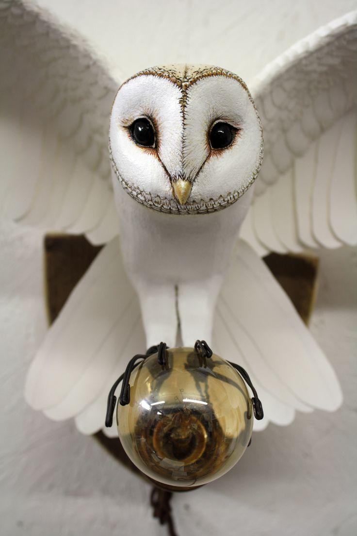 barn owl 10.jpg