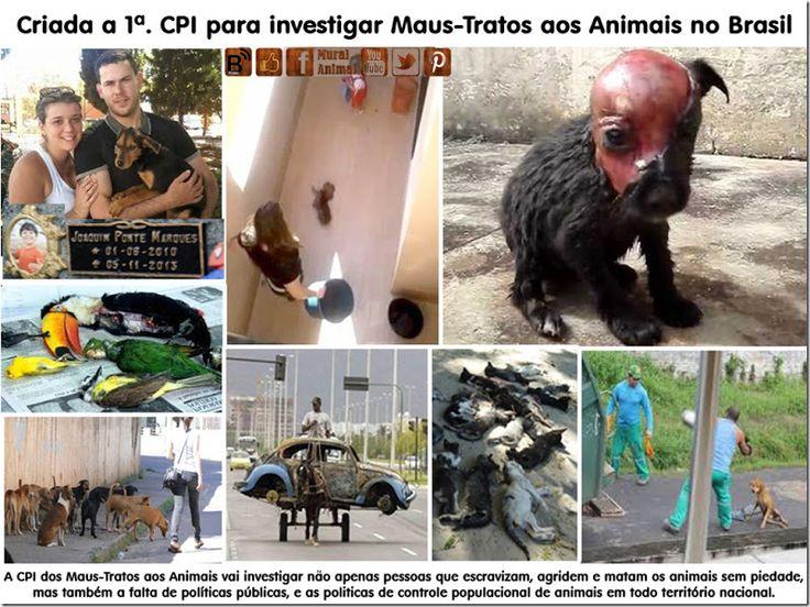Mural Animal: Criada a 1ª. CPI para investigar Maus-Tratos aos Animais no Brasil
