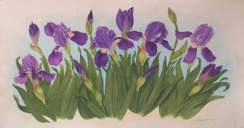 Wild Irises  50x70cm. watercolor