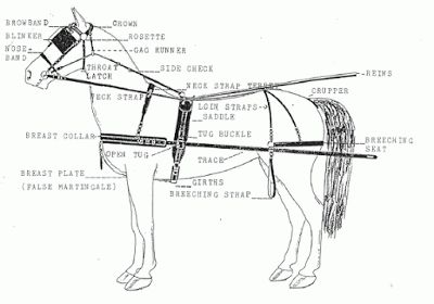 Carriage Driving Basics The Nitty Gritty Stuff Horse