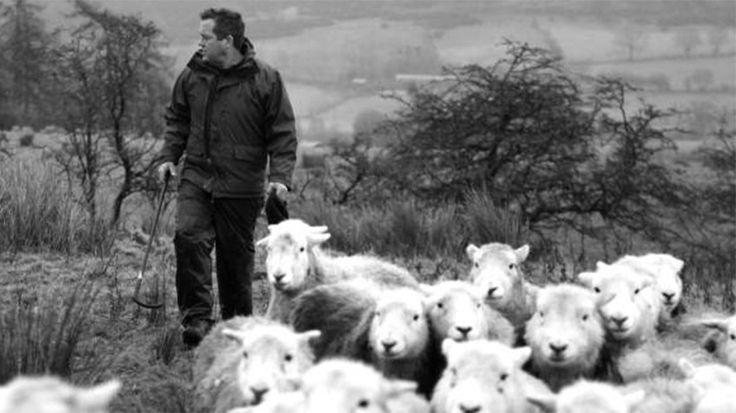 Un pastor inglés describe en un libro, fenómeno editorial, su vida en la granja y cómo cambió Oxford por el ganado
