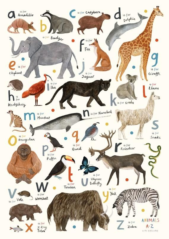 Animal Alphabet A Z A2 420mm X 594mm English Language A Z Etsy Animal Alphabet Animals Kids Fashion