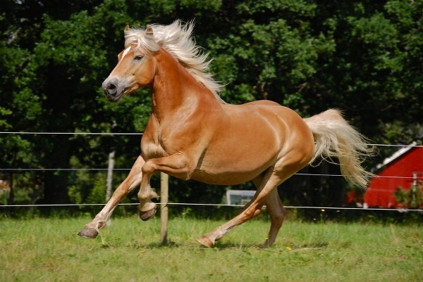 Top 10 Most Beautiful Horses in the World - Top On The List