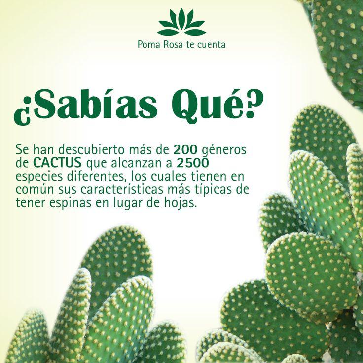 ¿Conoces acerca de los cactus? Con nosotros podrás aprender un poco más sobre estas increíbles plantas que nos regala la NATURALEZA.