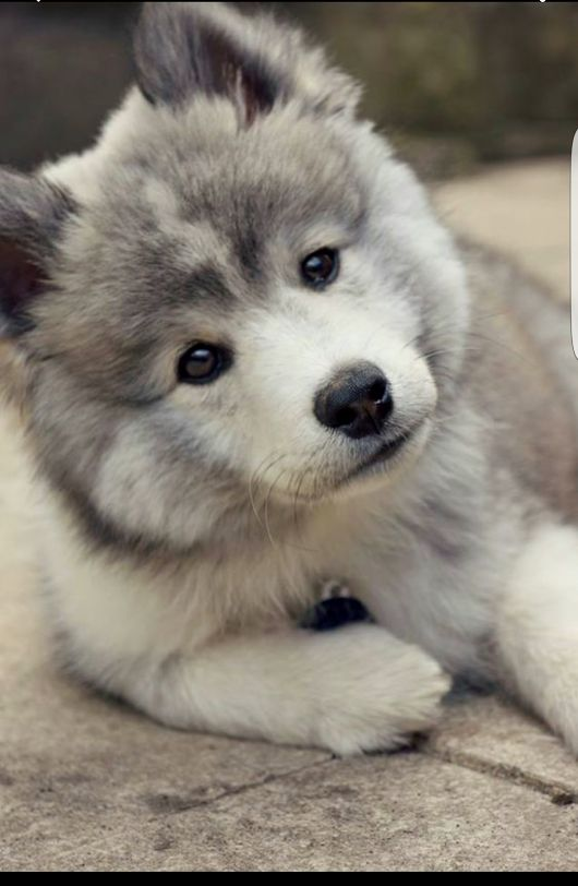 ↠Pinterest: deliriumrequiem ↞ - Tap the pin for the most adorable pawtastic fur baby apparel! You'll love the dog clothes and cat clothes