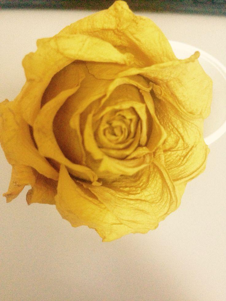 #yellow!!!