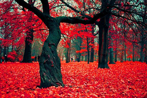 Crimson Forest, Poland: Fall Leaves, Secret Gardens, Fall Flowers, Crimson Forests, Facebook Like, Red Leaves, Red Carpets, Inspiration Pictures, Fall Weather