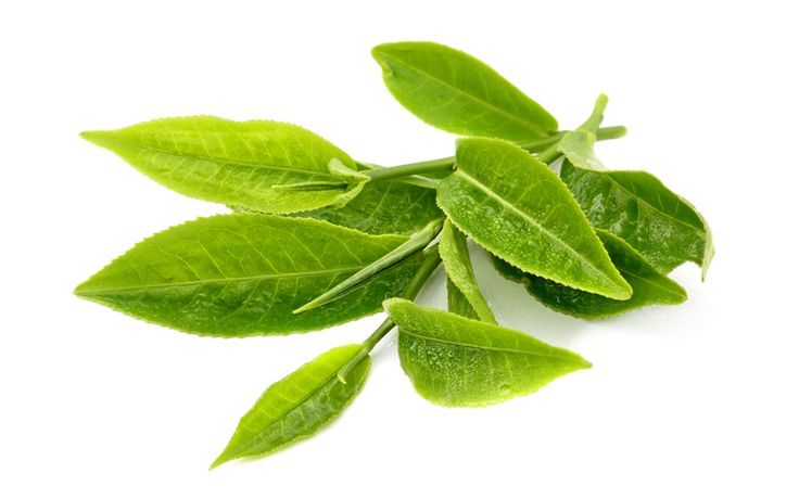 Reserve Green Tea  Rich in the antioxidant catechin, this tea gets its name for is green-coloured leaves when brewed and is the most favored of teas in all of China. Wildly popular throughout the world, green tea was first recognized outside of China in the early 1900's.