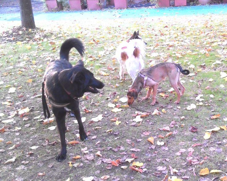 23/10/2015 - Torino con Peja e Brigitte