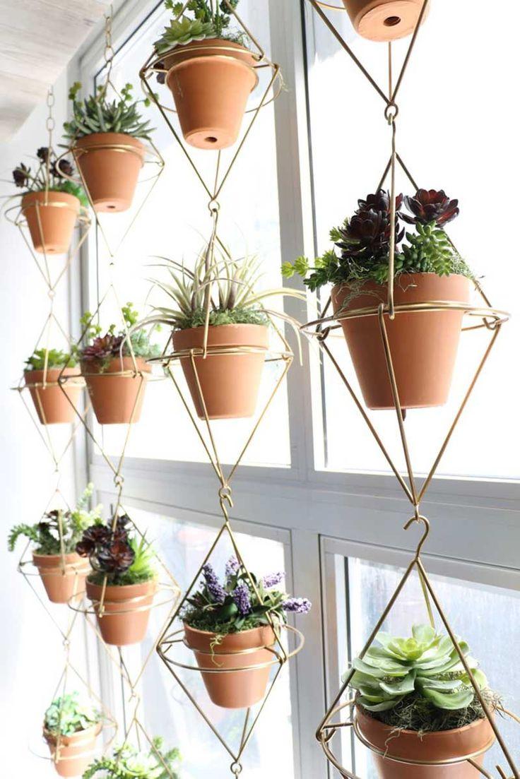 Plantas colgando de una estructura