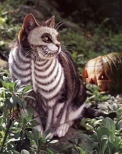 @Kelly Teske Goldsworthy Plante Can we paint my cat like this for the party??? lol jk :)