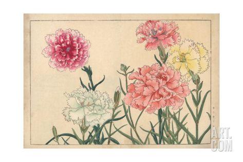 Carnations, Dianthus Caryophyllus Giclee Print at Art.com
