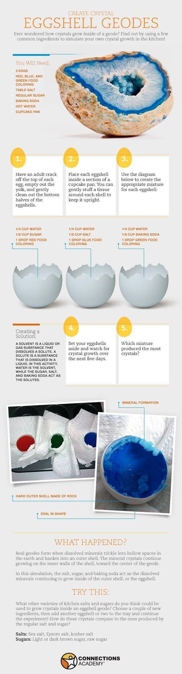 Creative DIY Science Activities for Homeschoolers | Crystal Eggshell Geodes by D… – Crockett's Classroom