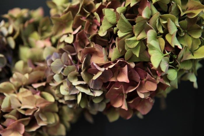 Easy To Make Hydrangea Wreath Tips To Make It Last Hydrangea Wreath Dried Hydrangeas Easy Hydrangea