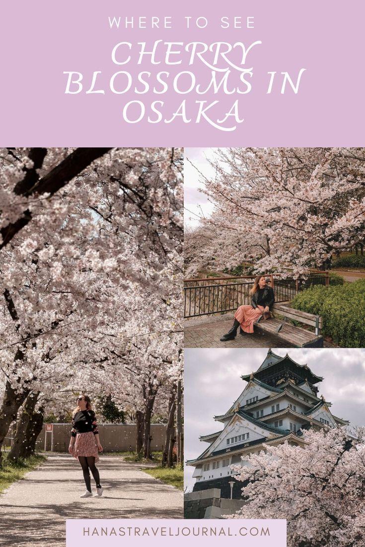 Where To See Cherry Blossoms In Osaka Cherry Blossom Osaka Blossom
